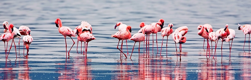 images/imgtitle/bsr-group_flamingo.jpg